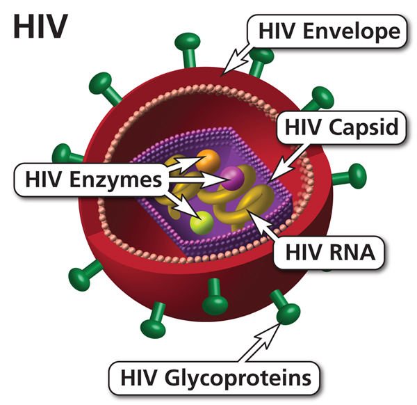 The HIV Virus in Action...